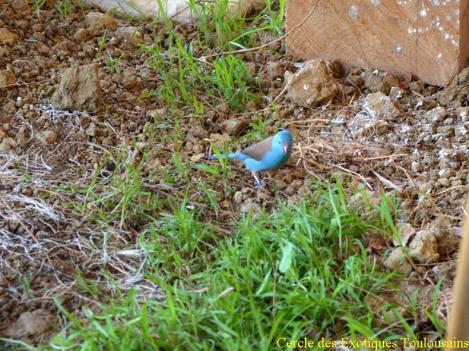 Cap bleu 2 bordermaker 1