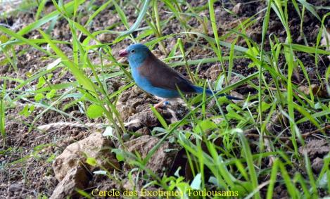 Male cap bleu bordermaker